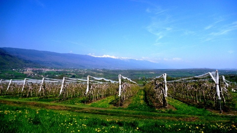 Vineyards and farms dot the landscape