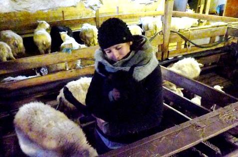 Curniss cuddles a lamb