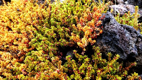 Colourful moss