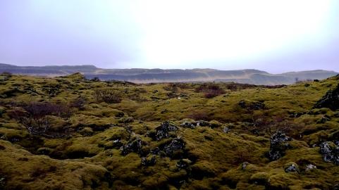 Moss lava field