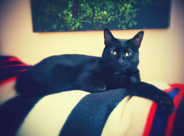 Alana's famous cat: The friendliest black cat to have road-tripped from Thunder Bay to Golden