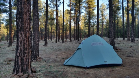 A beautiful forest for dispersed camping near Flagstaff