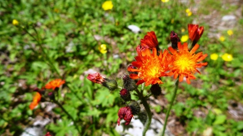Wild flowers on the trails