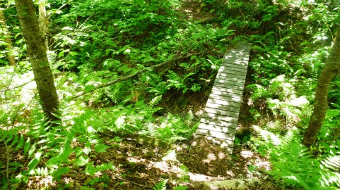Vibrant green and basic bridges along the trail