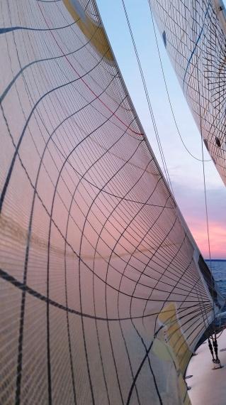 Pink sails at sunset