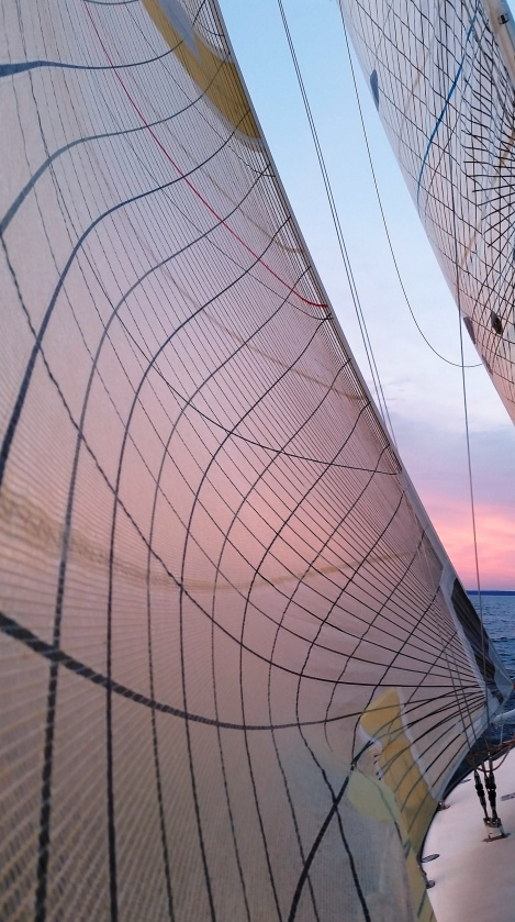 Pink sails at sunset