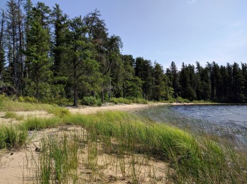 Wind swept beach on Little Metionga Lake