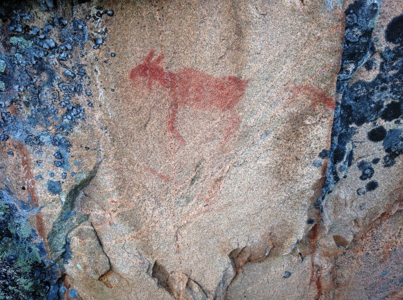 A moose pictograph on the Brightsand River