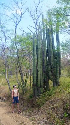 Massive cactus!